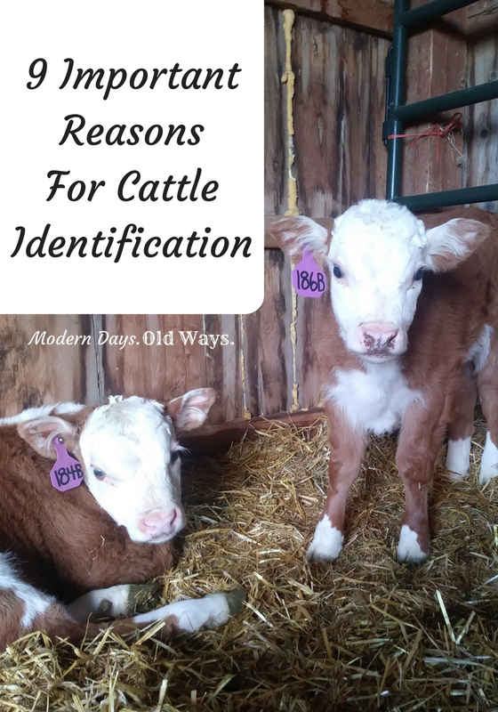 9 Important Reasons For Cattle Identification